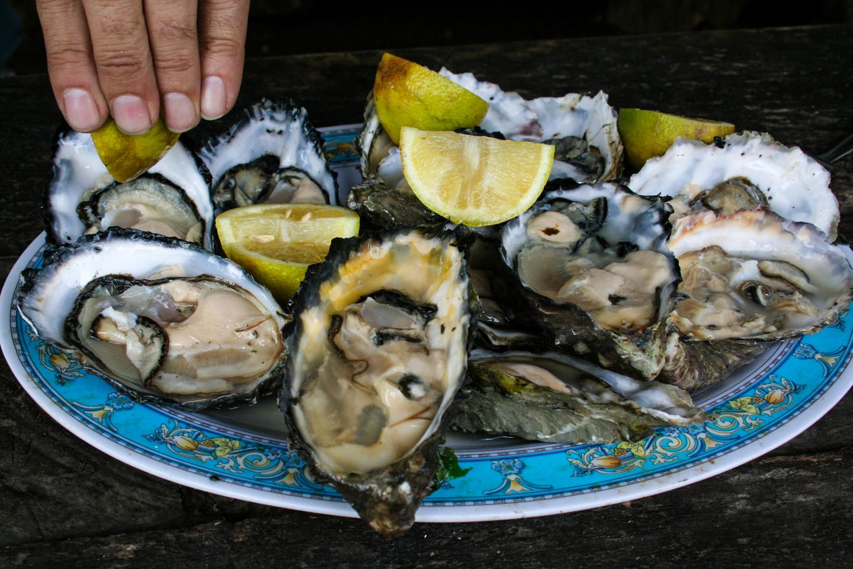 Oysters //stonostories.com